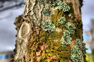 Full of lichens