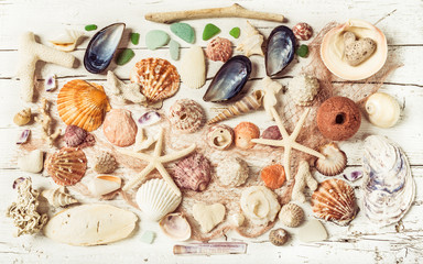 Seashells collection background, toned.Beach decoration.