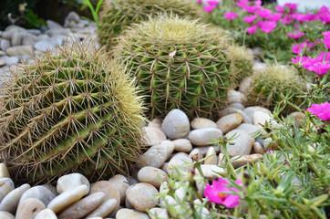 Globe shape cactus