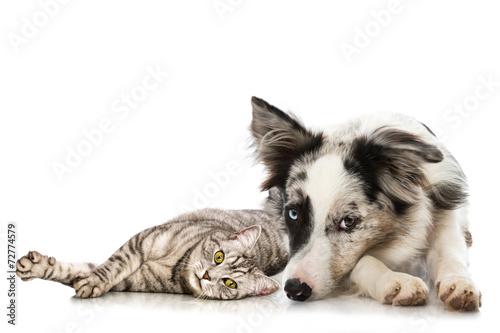 Spoed canvasdoek 2cm dik Kat Hund und Katze