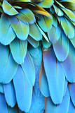 Fototapety Scarlet Macaw feathers