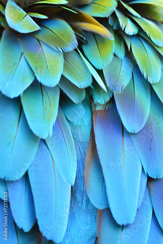 Foto op Canvas Papegaai Scarlet Macaw feathers