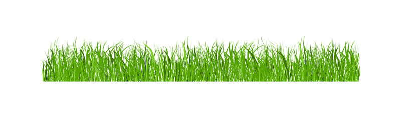 Green grass isolated on white background, illustration