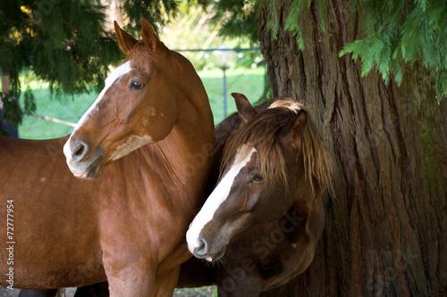 Staande foto Paardrijden Cavalli Curiosi