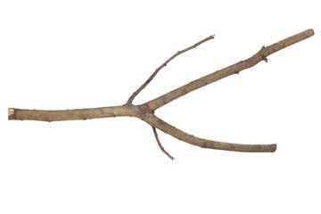 Branches Sticks