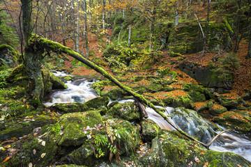 Steinbachklamm im Bayerischen Wald