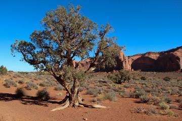arbre dans le desert