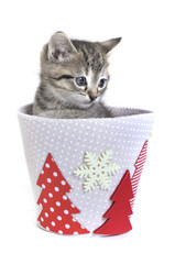 Kitten in a Christmas tub
