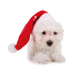 Kleiner weißer Hund mit Nikolausmütze