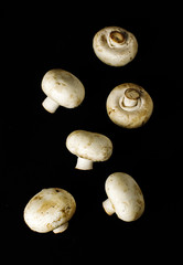 Raw champignon mushrooms on the dark background