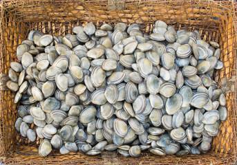 Fresh clams in a rustic basket.