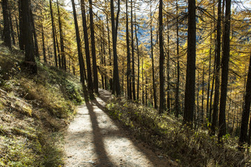 Waldweg oberhalb von Zermatt
