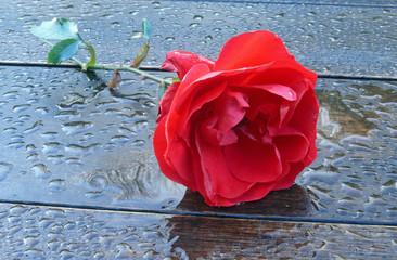 rosensorte tradition