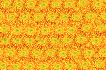 Background of yellow-orange chrysanthemums. Horizontally.