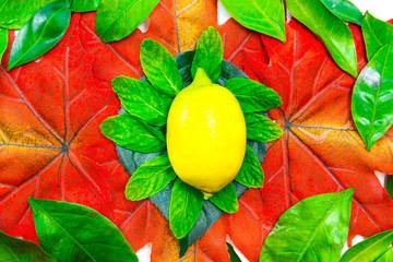 Zitronenscheibe auf Minzblättern