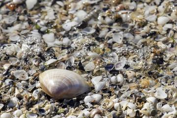 Conchiglie in riva al mare