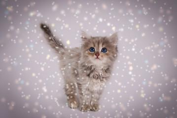 Котёнок на рождество
