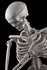 Human skeleton toy