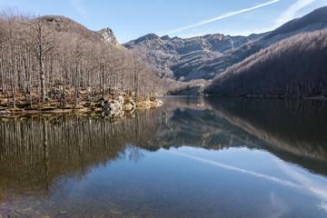 montagna e alberi riflessi nel lago