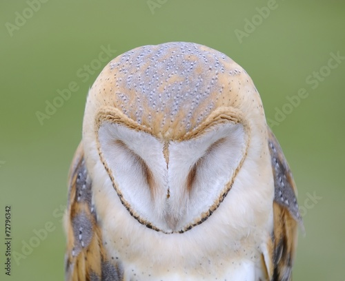 Foto op Plexiglas Uil Barn owl.