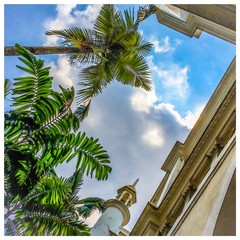 palm trees and sunny sky