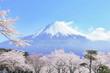 富士山�桜