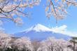 富士山と桜 - 72801556