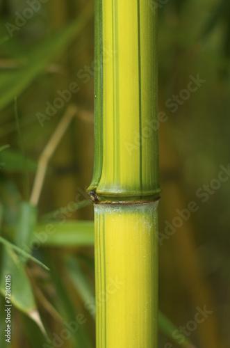 In de dag Bamboo bamboo close up