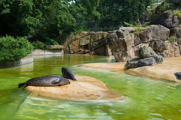 seals in zoo