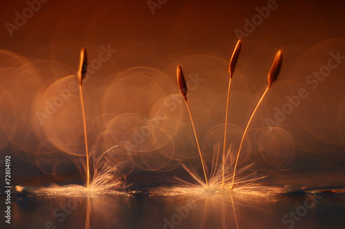 Foto op Aluminium Paardebloem abstract blurred natural background orange dandelion seeds