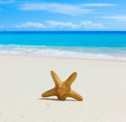 Sand Scene Stars