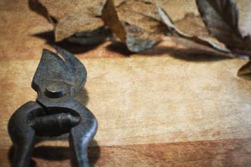 rusty garden scissors