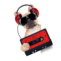 dj disco dog