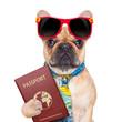 canvas print picture - dog passport