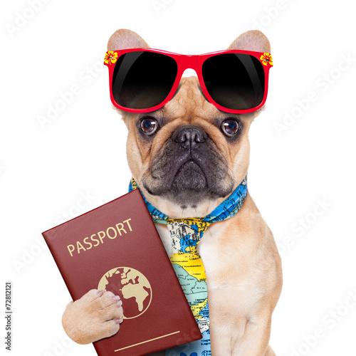 canvas print picture dog passport