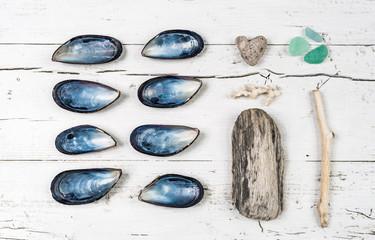Beach collections still life, unusual.Seashells