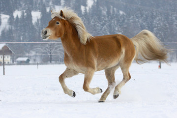 Horse in the snow 2