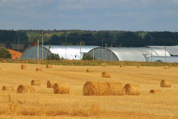 twist hay field cleaning