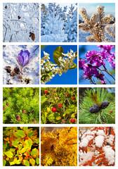 Collage. Twelve months. Calendar
