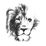 lion head. hand drawn. vector illustration - 72820598
