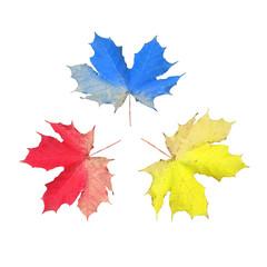 Ahornblätter in den Grundfarben