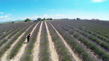 Aerial video Provence - lavender field in the Valensole ,France
