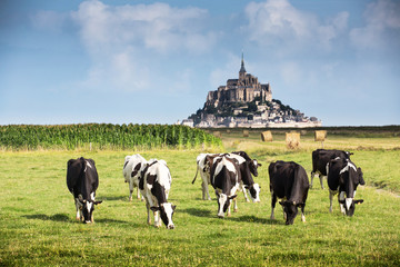 Mont Saint Michel bay listed as UNESCO World Heritage, cow