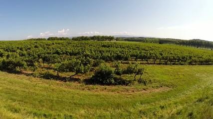 flying over an france vineyard