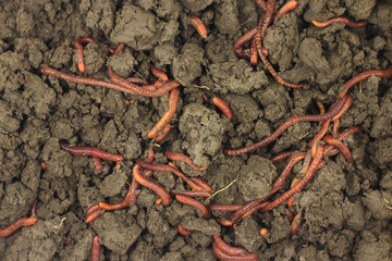 earthworms in the land of abstract background