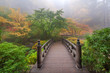 Moon Bridge in Japanese Garden Foggy Colorful Fall Morning - 72826373