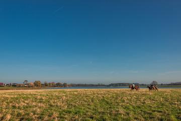 Horsemen in the golden field of grass, Autumn
