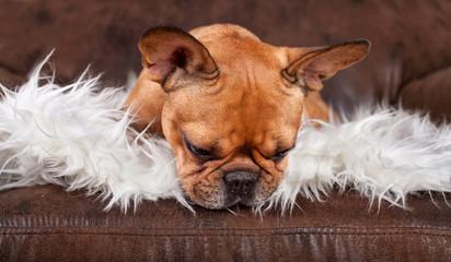 kleiner Hund auf Ledersessel