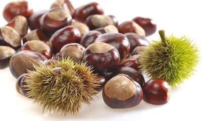 Isolated chestnuts.