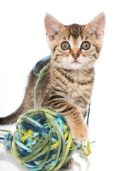 Kätzchen mit Wollkneul